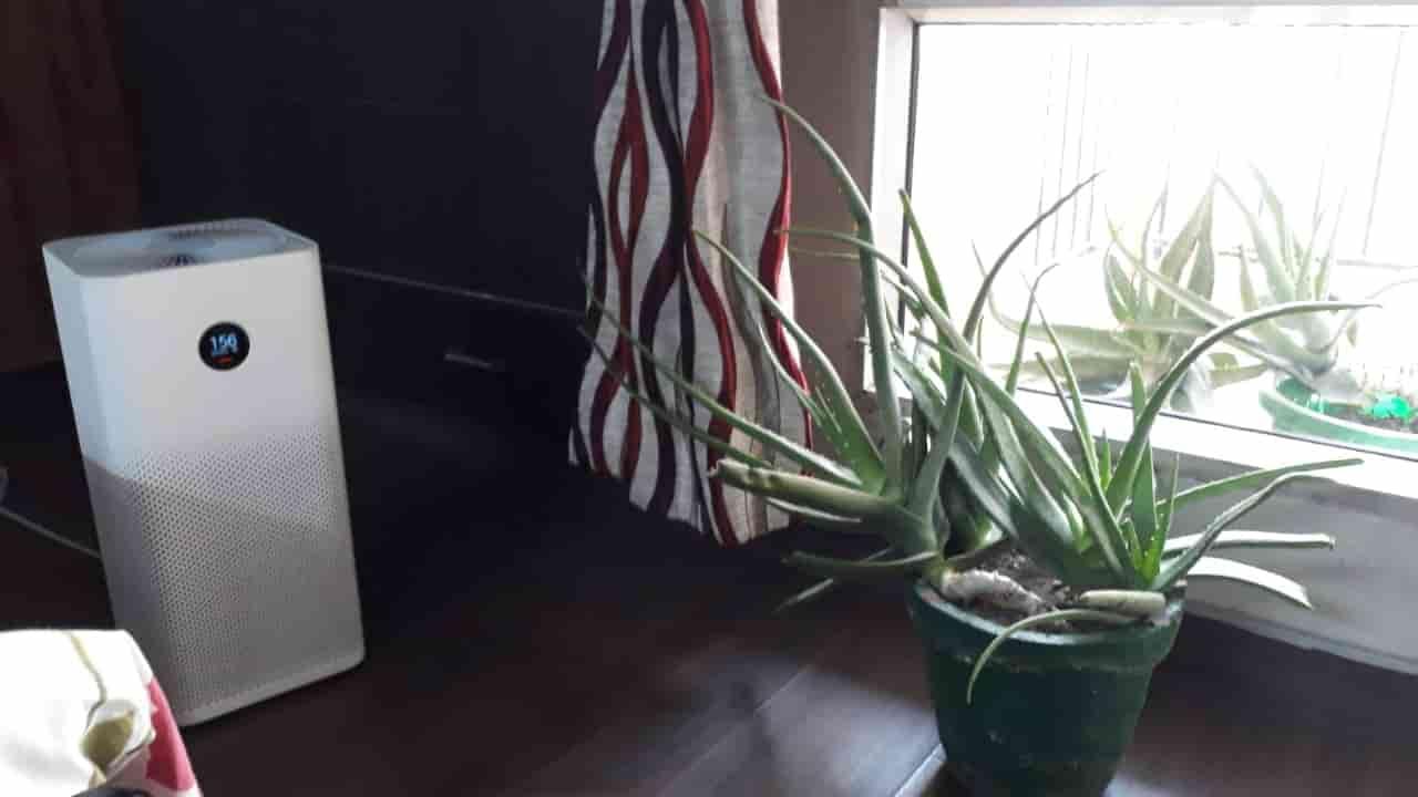 MI Air Purifier 2S plus plants