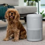 Levoit Core P350 Review – Air Purifier For Houses With Pets